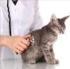 Ветеринарные клиники в Глотовке